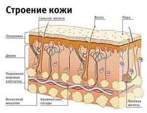 Симптомы угревой сыпи