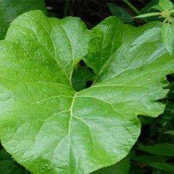 Лечение дерматита гомеопатией, травами, дегтем, лавровым листом