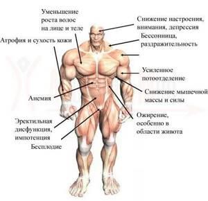 Препараты для повышения тестостерона у мужчин и у женщин