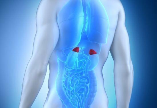 Что значит анализ на кортизол в крови