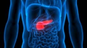 Строение поджелудочной железы: анатомия