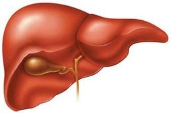 Эстрогены - гормон вырабатывающийся у женщин в яичниках