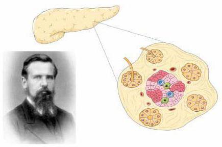 Что такое инсулин и его роль в организме