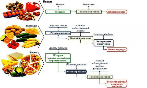Ферменты поджелудочной железы: анализы и препараты