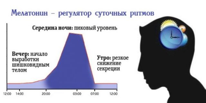 Мелатонин: в каких продуктах питания содержится в большом количестве, таблица