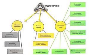 Надпочечники, строение, функции, гормоны надпочечников