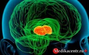 Дофамин: действие гормона на организм человека