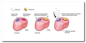 Уровень сахара в крови: норма у женщин и мужчин. Признаки повышенного уровня. Анализ на глюкозу