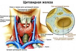Гипотиреоз - причины, симптомы, диагностика и лечение