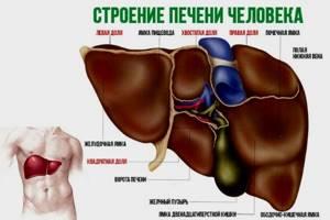 УЗИ печени: подготовка к процедуре, показания