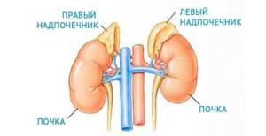 Гиперфункция надпочечников: причины, симптомы и диагностика