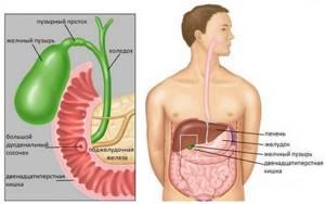 Печеночный запах изо рта: причины. Как печень влияет на кожу лица, глаза, ногти