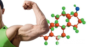 Гормон тестостерон, строение, фунции и его роль в организме