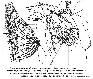 Галактоцеле молочной железы: причины, симптомы, диагностика и методы лечения