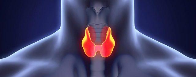 Антитела к тиреоглобулину повышены: что это значит, причины, симптомы, диагностика и методы лечения