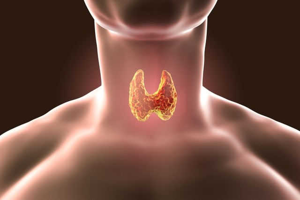 За что отвечает гипоталамус, его функции и гормоны