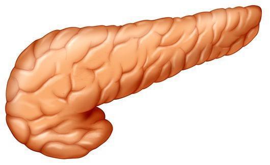 Железы человека внешней, внутренней и смешанной секреции