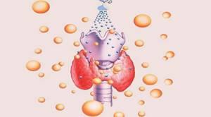 Антитела щитовидной железы повышены чем опасно, что такое антитела в крови