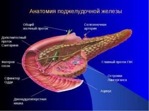 Алкогольный панкреатит - причины, симптомы, диагностика и лечение