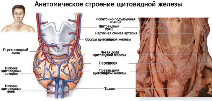 Васкуляризация щитовидной железы услиена или повышена - что это значит