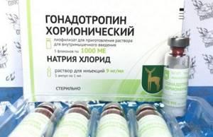 Отзывы о использовании гонадотропина в бодибилдинге
