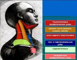 Лимфоузлы и щитовидка: связаны ли они между собой?
