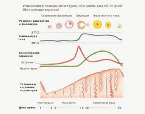 Как и когда сдавать анализ крови на эстрогены мужчинам и женщинам
