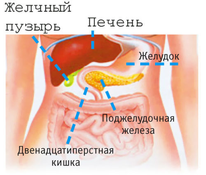 Роль и функции поджелудочной железы в организме человека