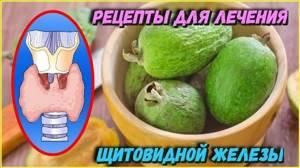 Герань для лечения щитовидной железы у женщин