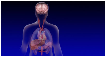 Печеночная энцефалопатия - причины, симптомы, диагностика и лечение