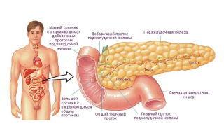 Панкреатит: что это такое, первые признаки, симптомы у взрослых и лечение