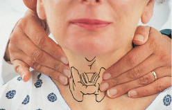 Пальпация щитовидной железы: правила и техника