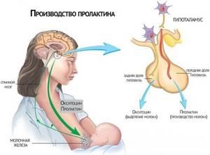 Агалактия - причины, симптомы, диагностика и лечение