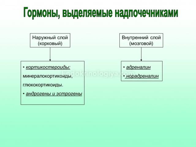 Эффективные препараты для надпочечников и нормализации их работы